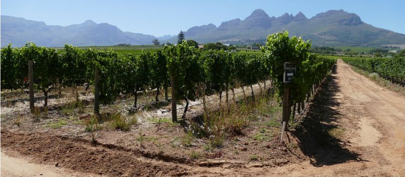 Photo for: DNA Vineyards- A Vineyard Inspired By Nature