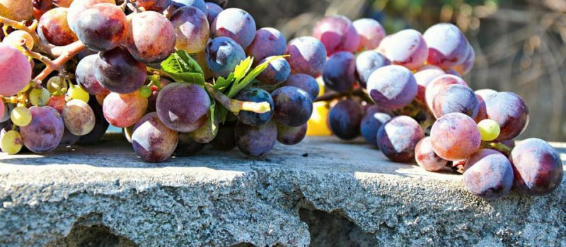 Photo for: The Most Popular Types of Red Wine Grapes