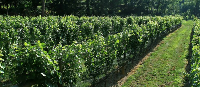 Photo for: Maple Springs Vineyard - Artisan Winery Located In Hills Of Berks