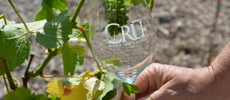 Photo for: CRŪ Winery- Whatever You Do, Pour Yourself Into It