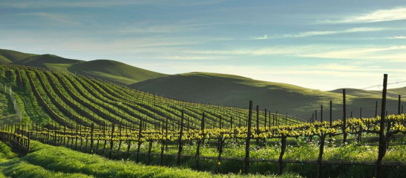 Photo for: Rodney Strong Vineyards - From The Land Of Sonoma County