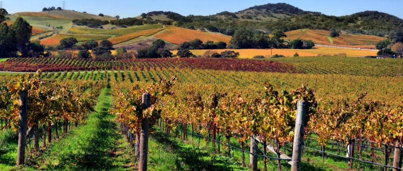 Photo for: Top 10 Wineries of Napa Valley